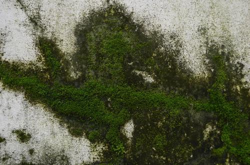 moss-concrete