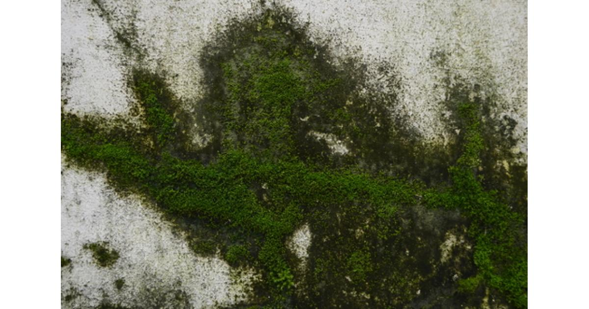 Removing Moss From Concrete Surfaces